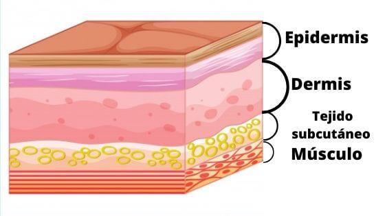 Infografía de la piel y sus capas